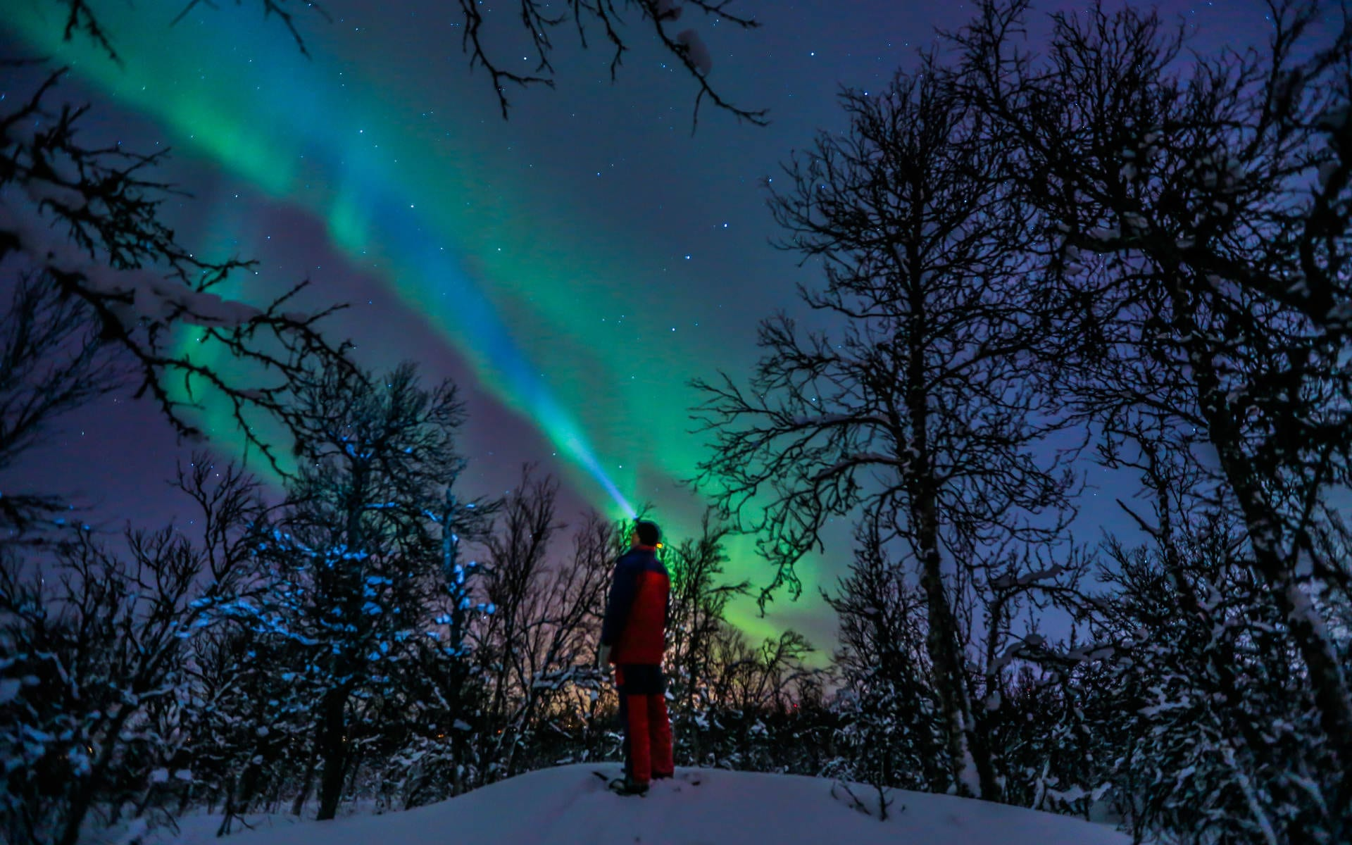 Northern lights and tree view