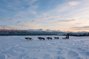dog sledding scenery arctic norway