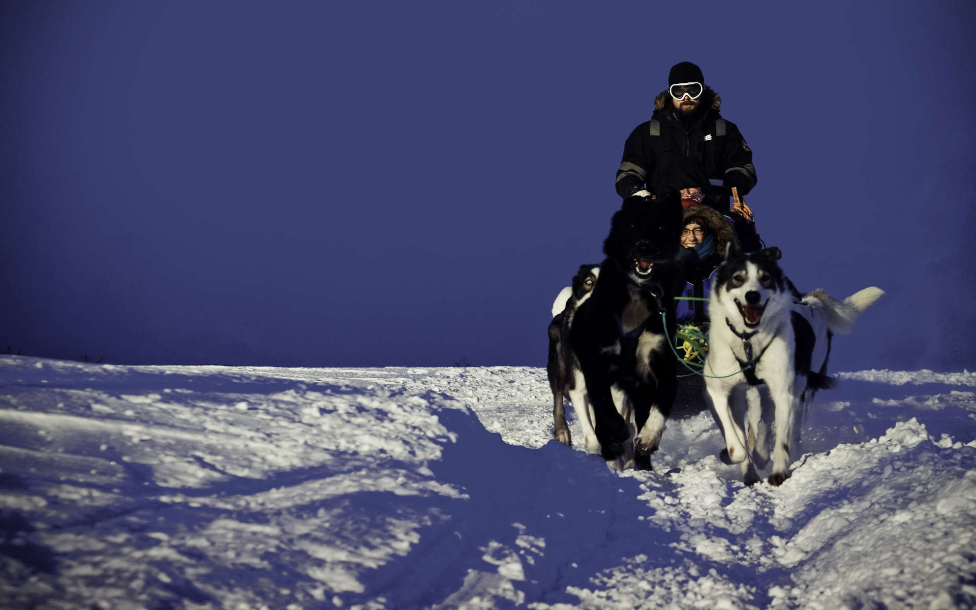dog sledding fast