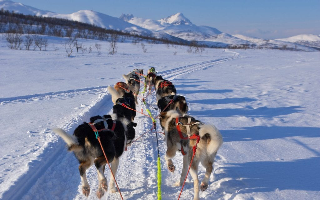 dog sledding tours norway