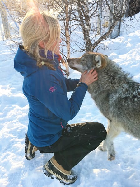 Kiss of the Arctic Wolf Tour