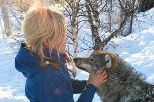Kiss of the Arctic Wolf Tour norway