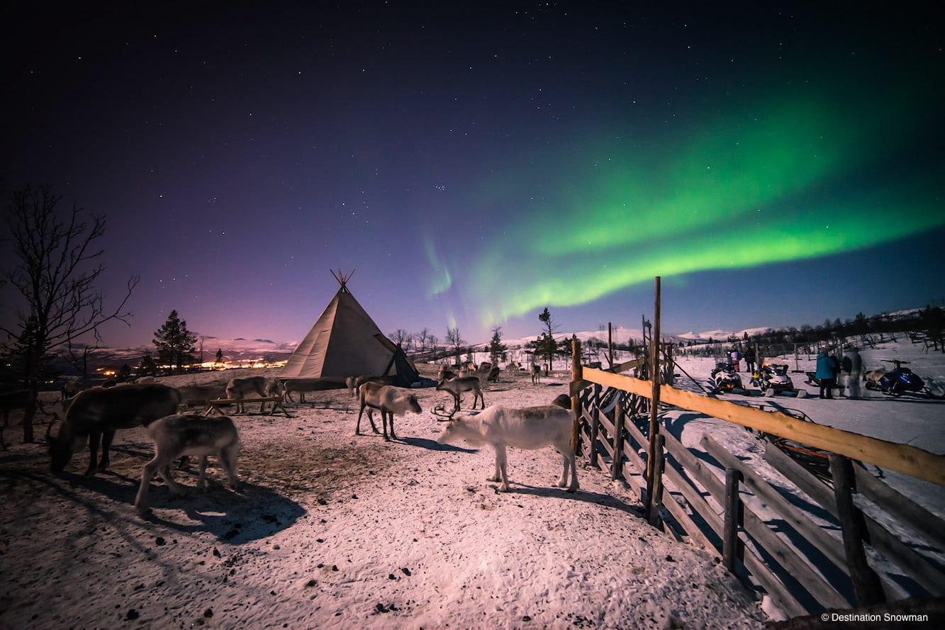 aurora borealis night sky lavvu reindeer