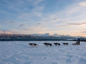dog sledding scenery arctic norway