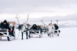 reindeer sledding tromso snowy landscape