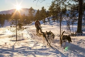 dog sledding on sunny day in arctic norway mountains