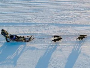 Husky dogsledding ride pushing a sleigh in the snow