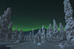 northern lights and snow covered trees in lapland winter evening finland