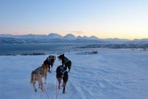 Husky dogsledding excursions in Tromso Norway