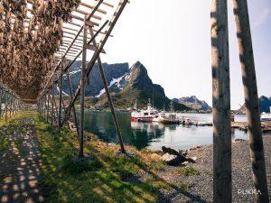Pukka Reine-fish-walk